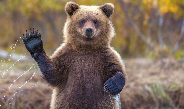 Indraznesti? Hai sa descoperi sanctuarul ursilor de la Zarnesti!