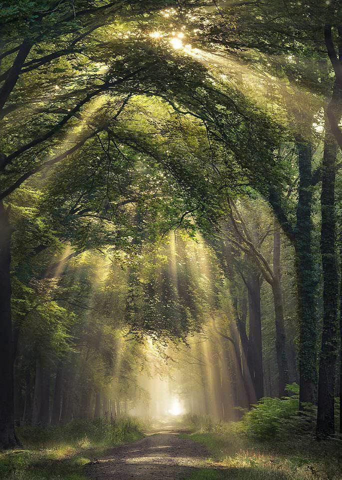 Padurea de Argint și alte locuri pe care trebuie sa le descoperi în acest an